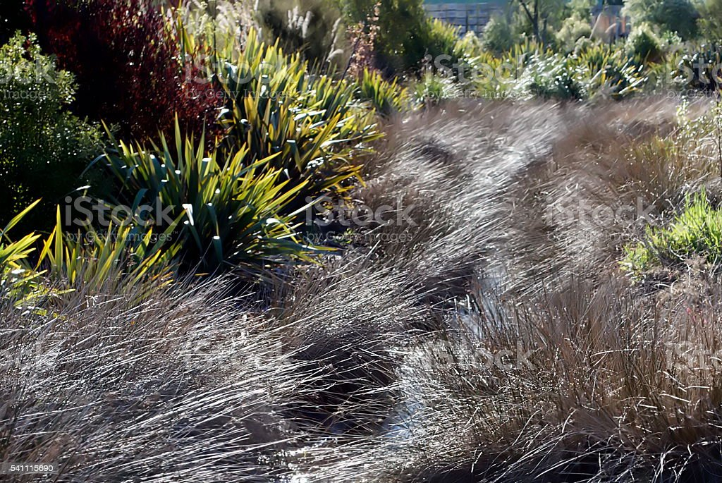 New Zealand Flora in Motion stock photo
