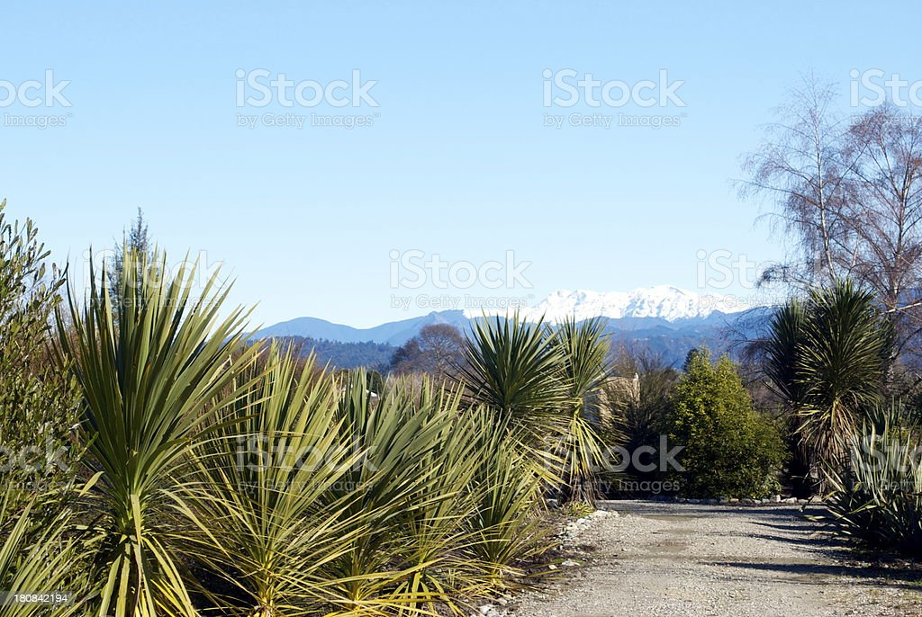New Zealand Flora in Winterscape royalty-free stock photo