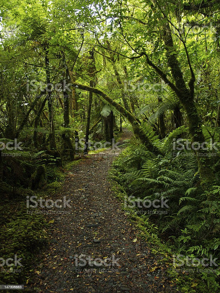 New zealand forest royalty-free stock photo