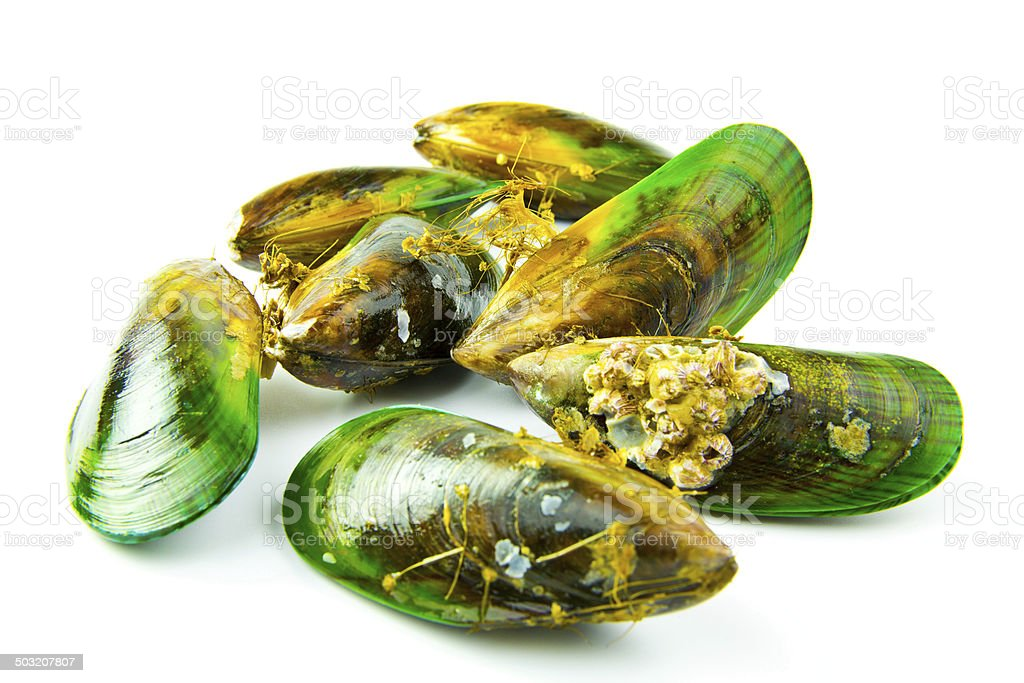 New Zealand Green Lipped Mussels stock photo