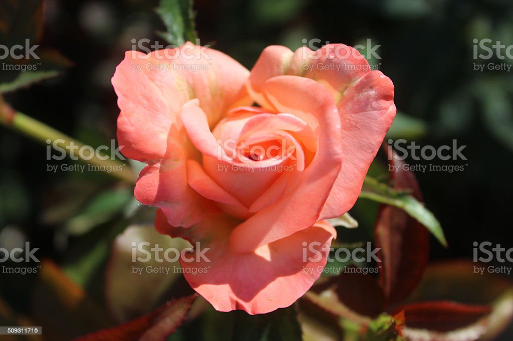 'New Zealand' Heart In Nature stock photo