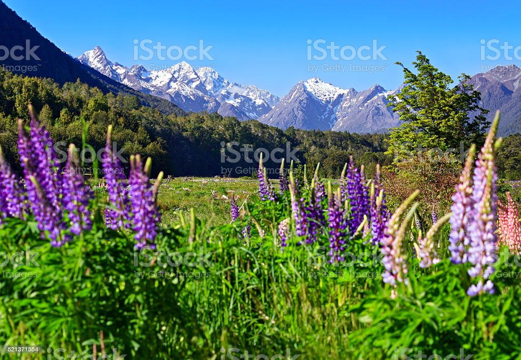 New Zealand landscape in Eglinton Valley, Milford road stock photo