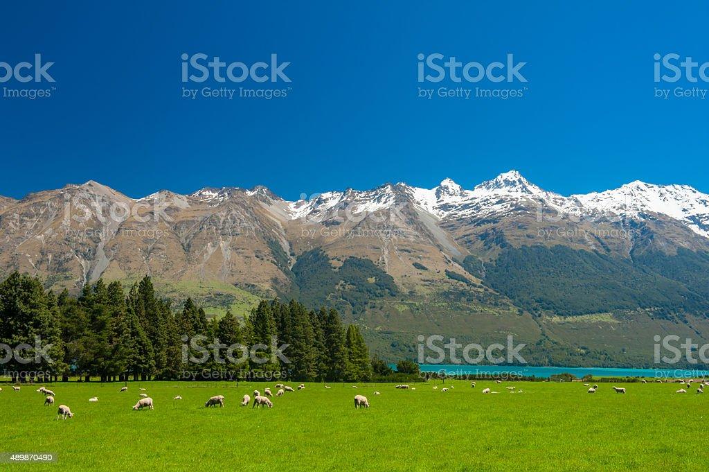 New Zealand mountains stock photo