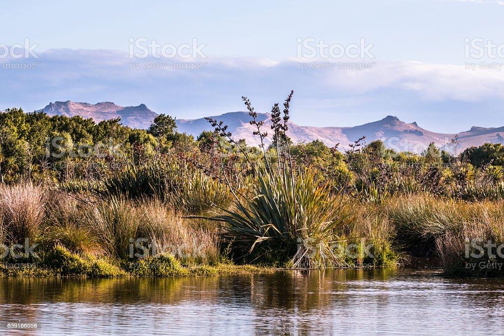 New Zealand native palnts on a lake shore stock photo