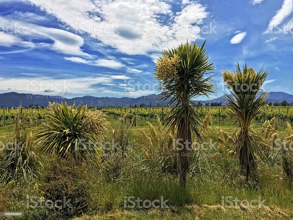 New Zealand Native Plants in Vineyard royalty-free stock photo