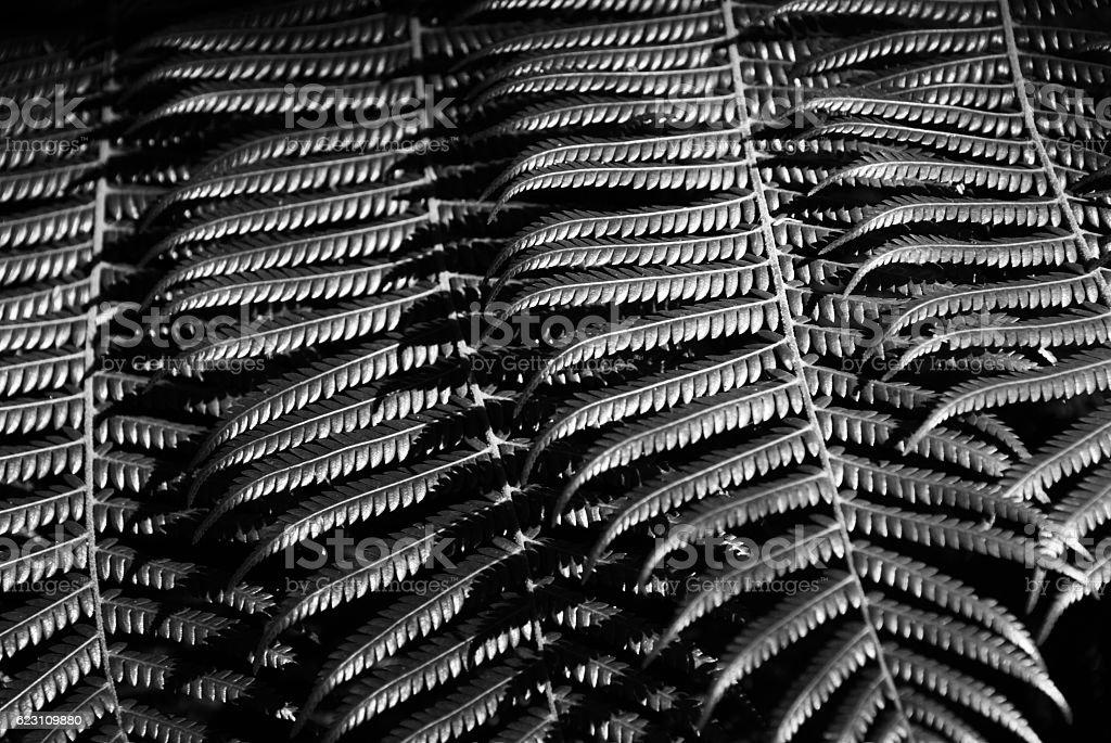 New Zealand Native Ponga or Punga Tree Fern Frond stock photo