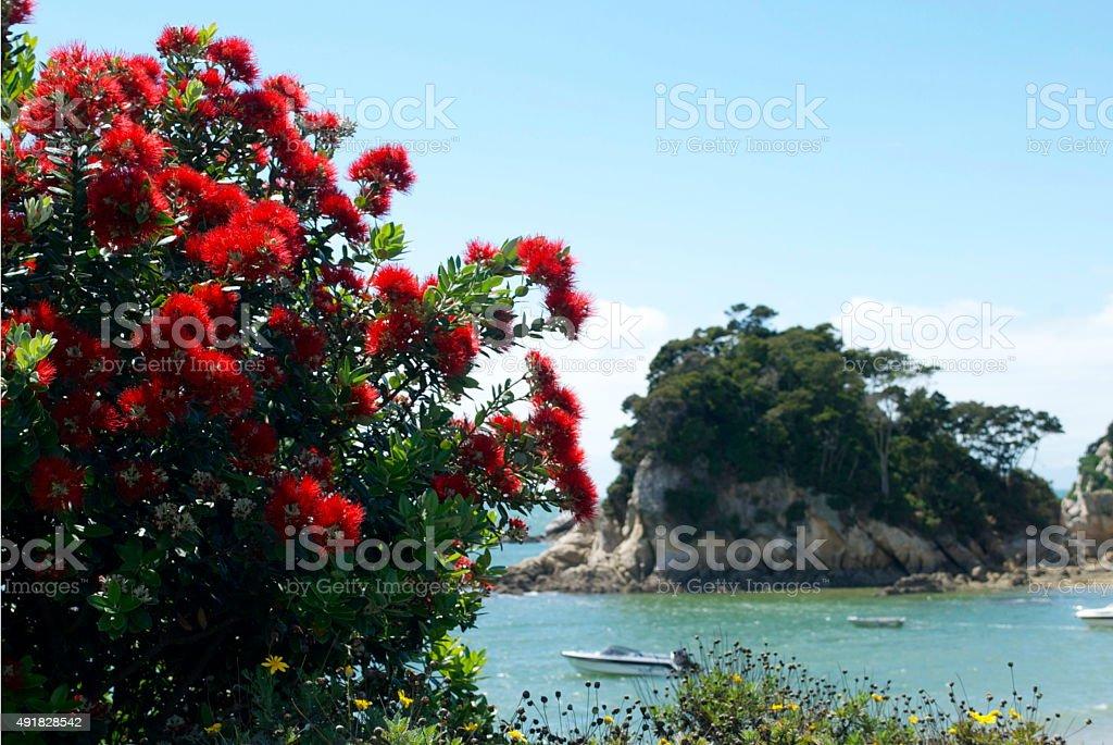 New Zealand Pohutukawa and Seascape stock photo