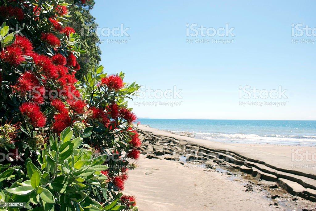 New Zealand Pohutukawa & Seascape; Auckland, NZ stock photo