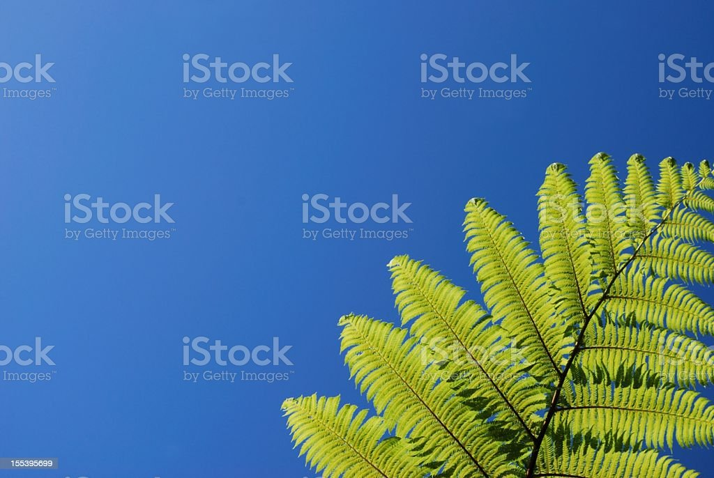 New Zealand Punga Fern stock photo
