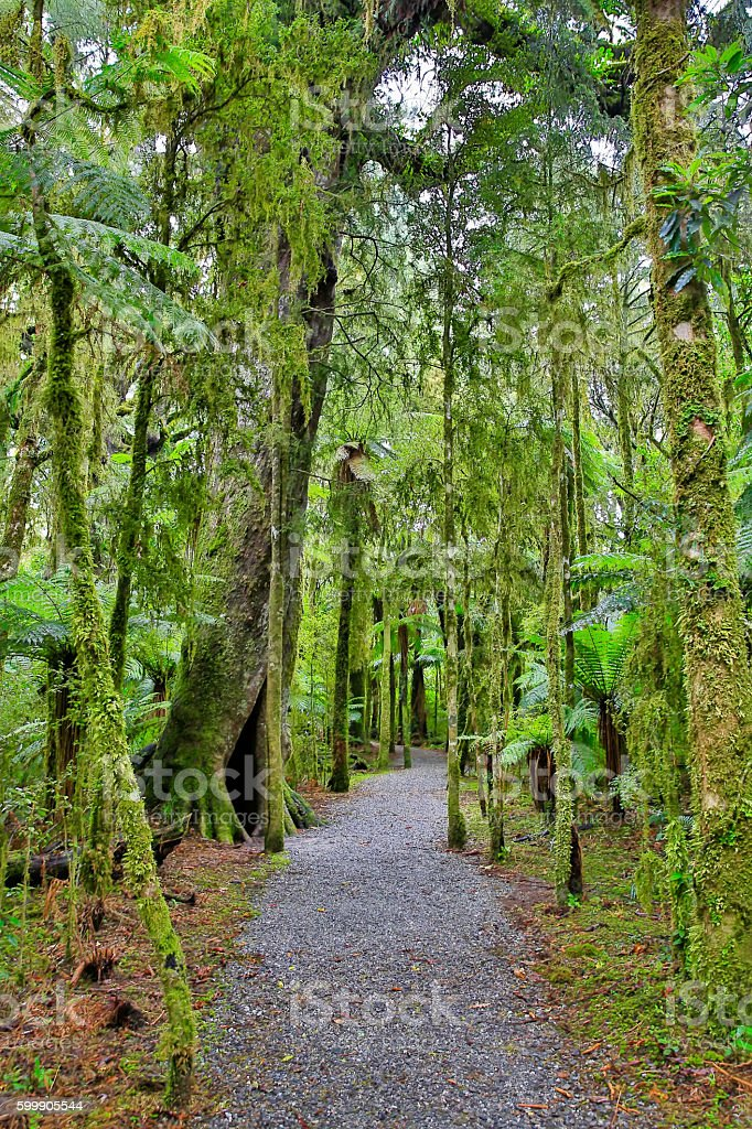 New Zealand rain forest in Westland National Park stock photo