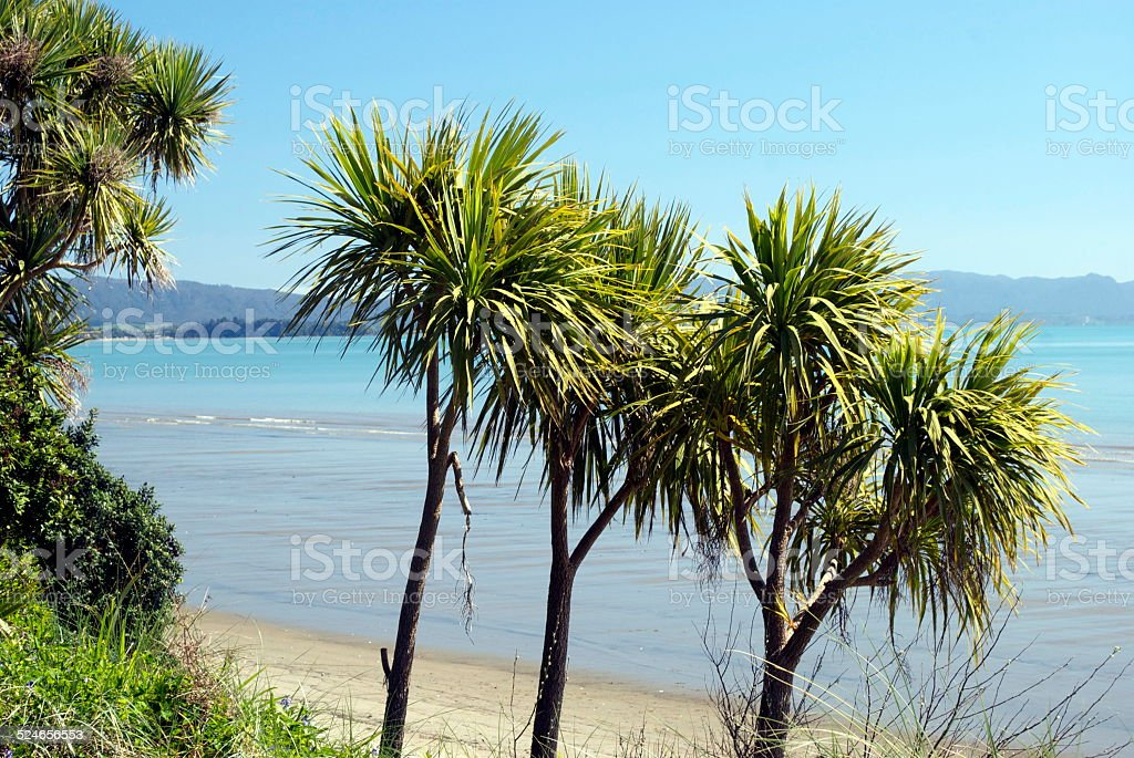 New Zealand Seascape with Cabbage Trees stock photo
