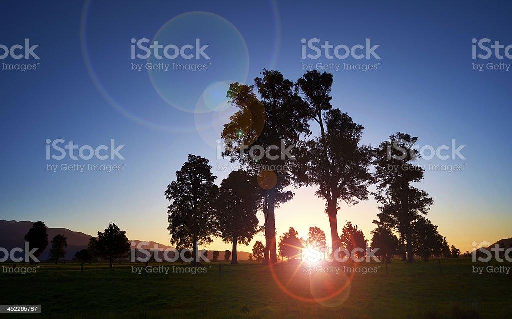 New Zealand Trees At Sunset stock photo