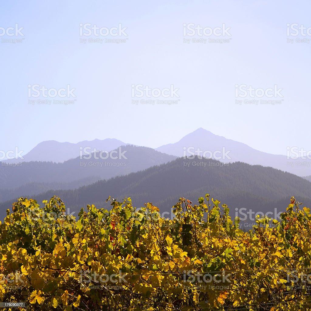 New Zealand Vineyard in Autumn royalty-free stock photo