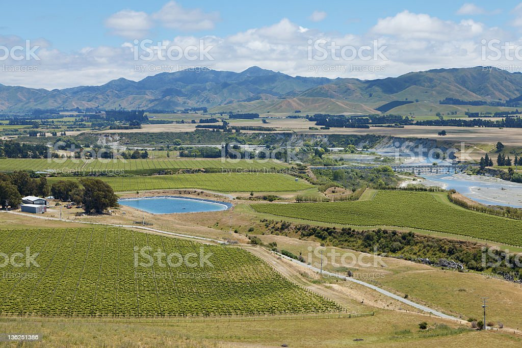 New Zealand Wine Country royalty-free stock photo