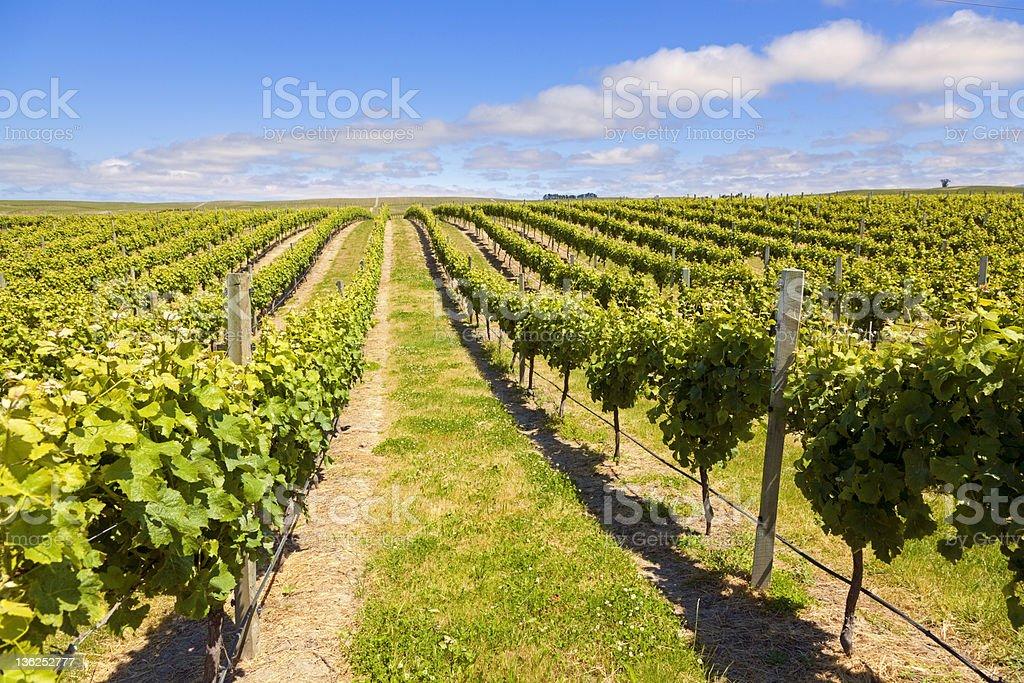 New Zealand Wine Country royalty-free stock photo