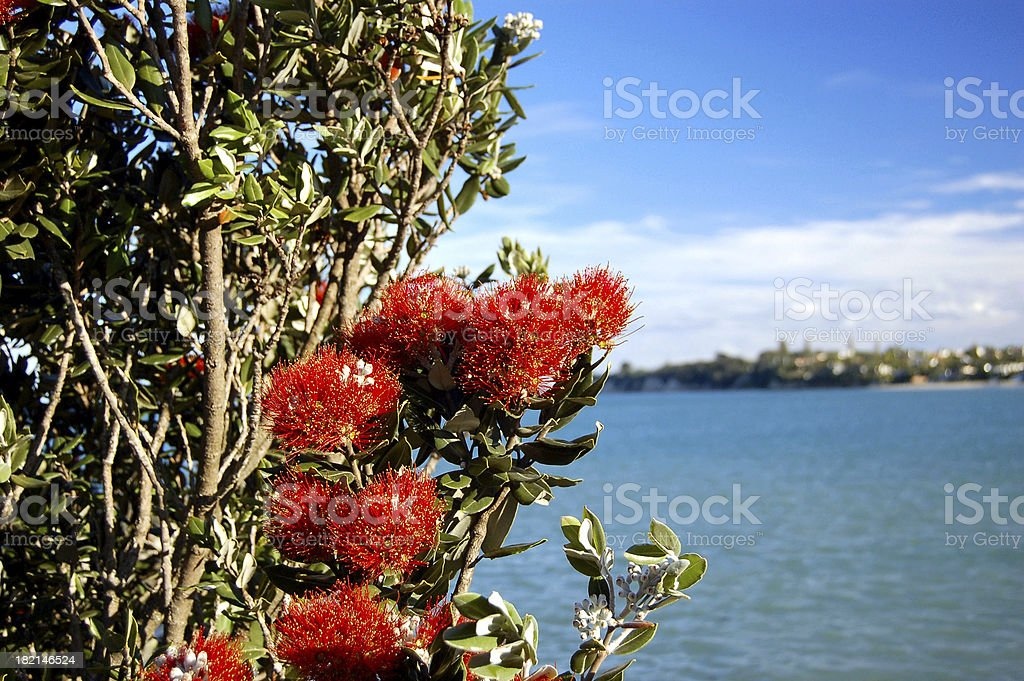 New Zealand Xmas Tree stock photo