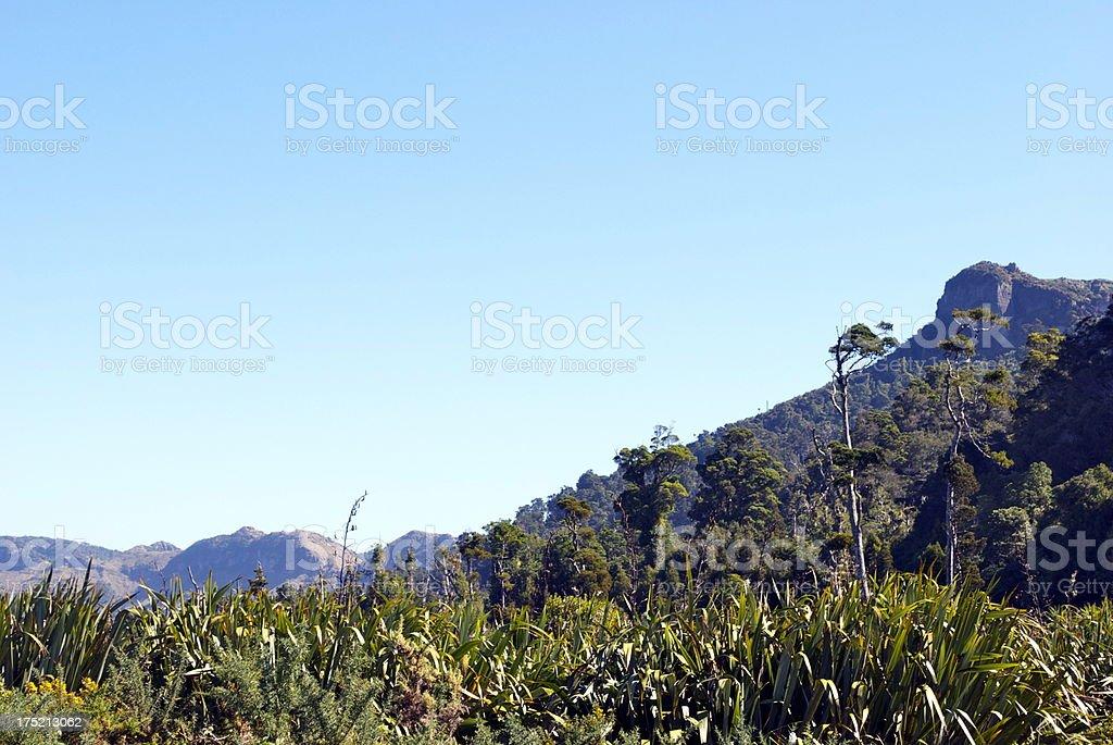 New Zealand's Native Flora, Mangarakau, Golden Bay stock photo