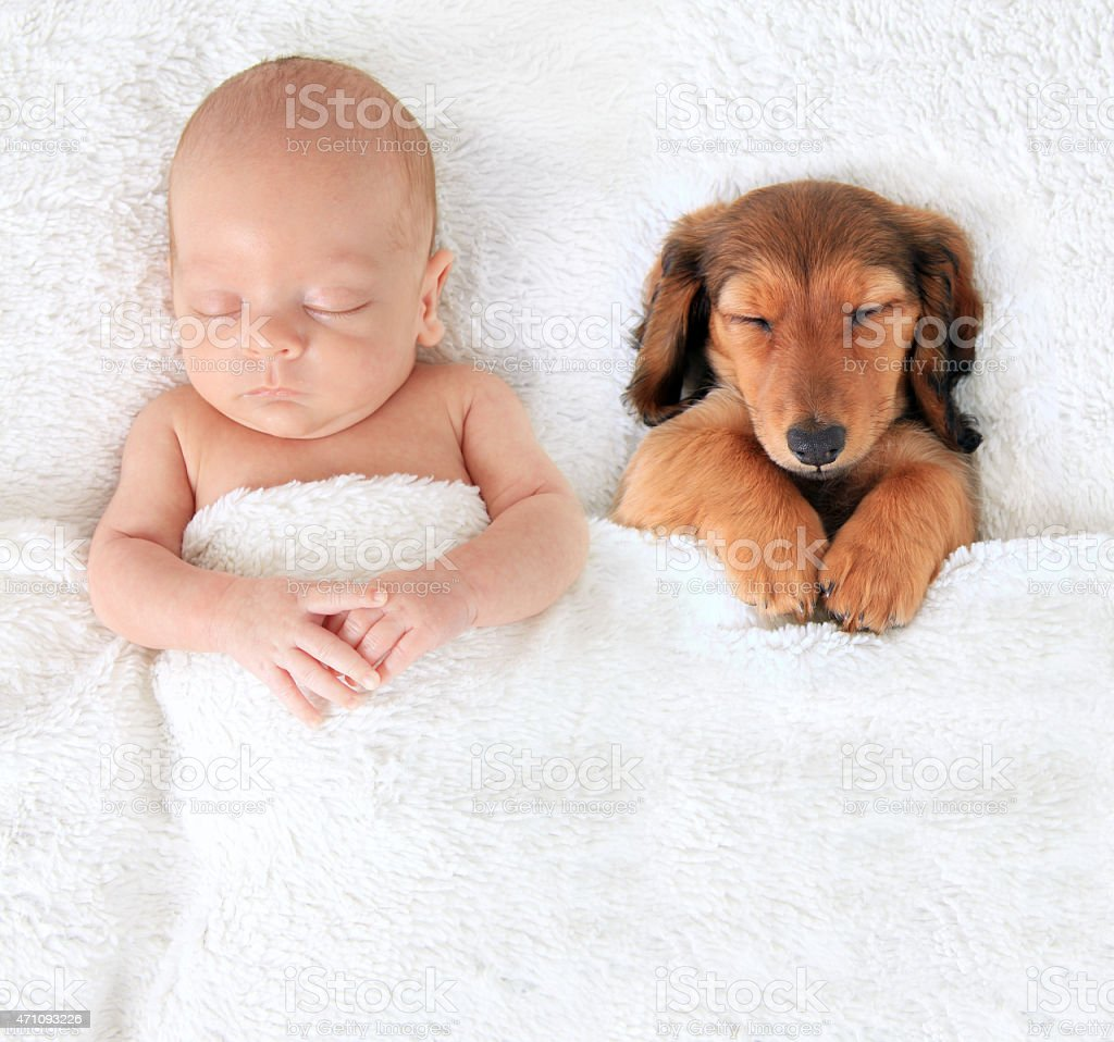 Newborn baby and puppy stock photo