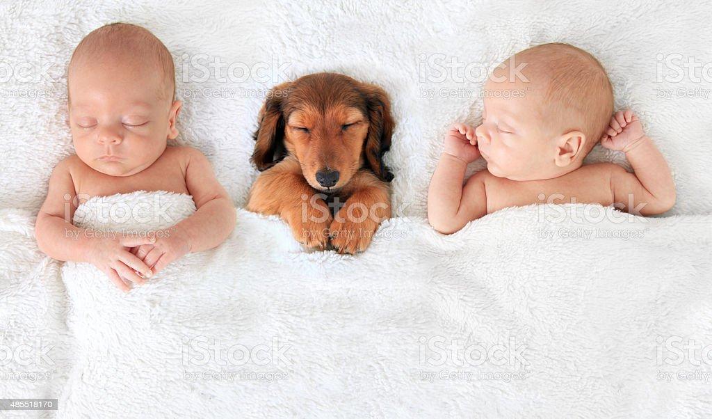 Newborn baby and puppy stock photo