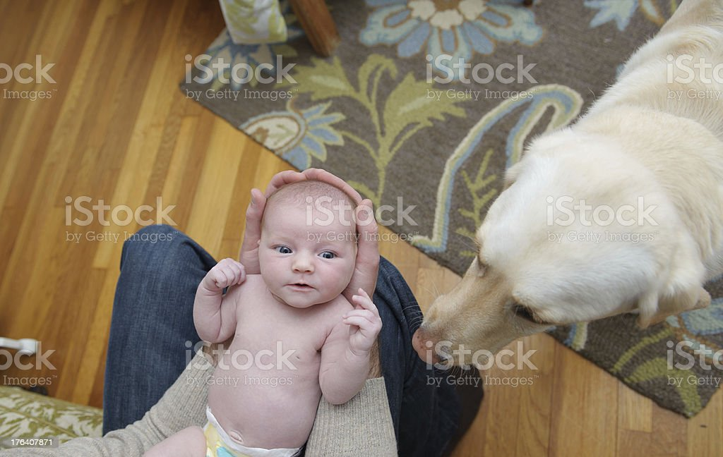 Newborn Girl and her Dog royalty-free stock photo