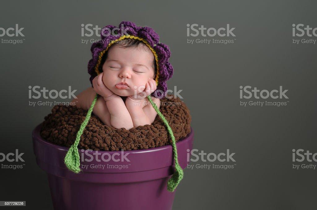 Newborn Girl Wearing a Flower Bonnet stock photo