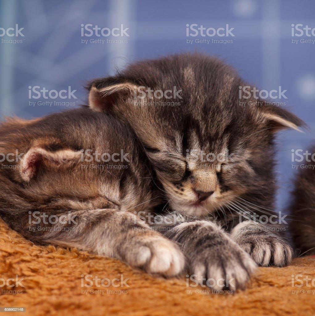 Newborn kittens stock photo