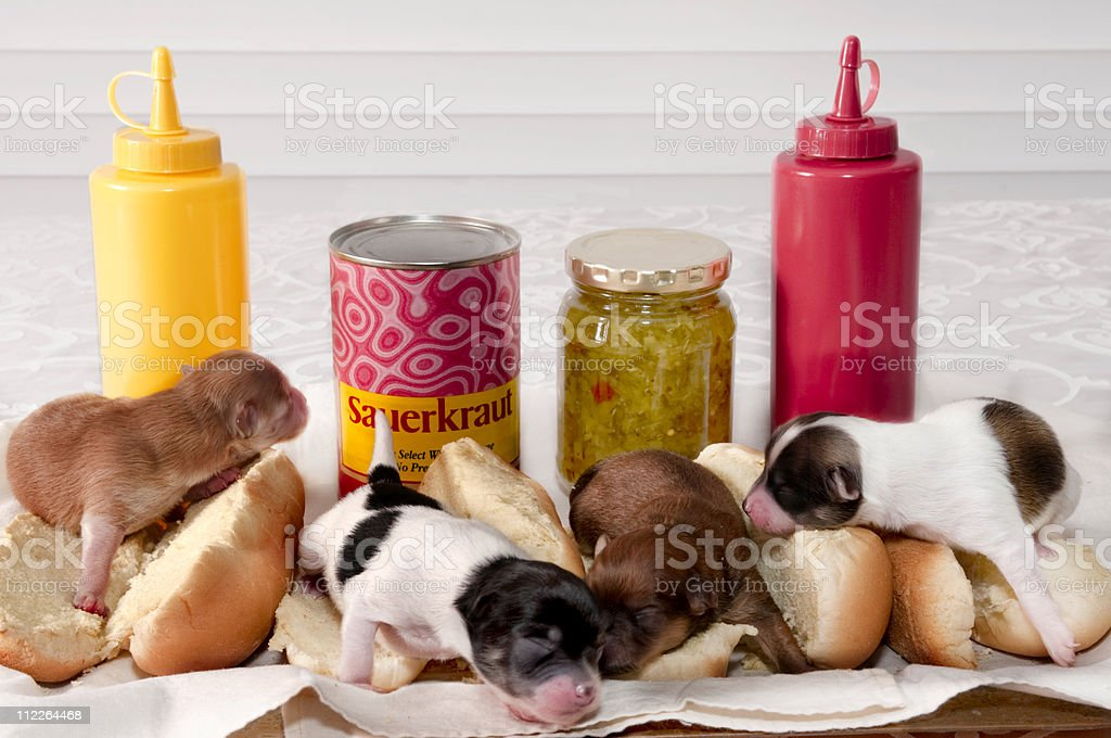 Newborn puppies in hot dog rolls with condiments on the side stock photo