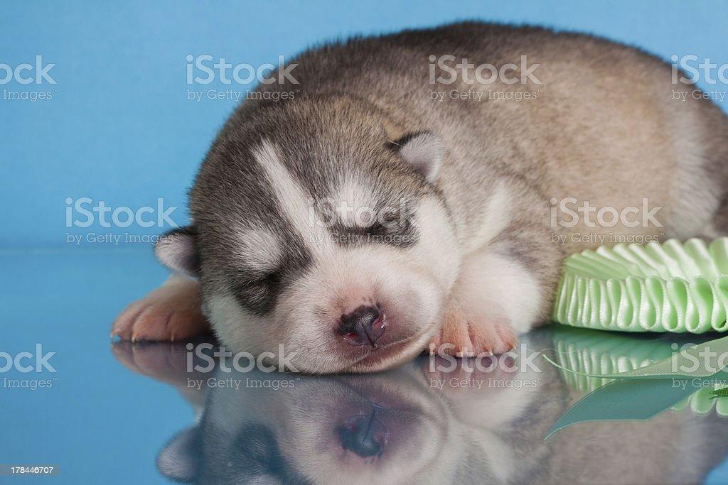 Neugeborene Welpen Lizenzfreies stock-foto