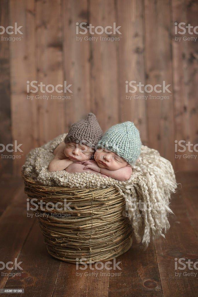 Newborn Twins Sleeping in a Basket royalty-free stock photo