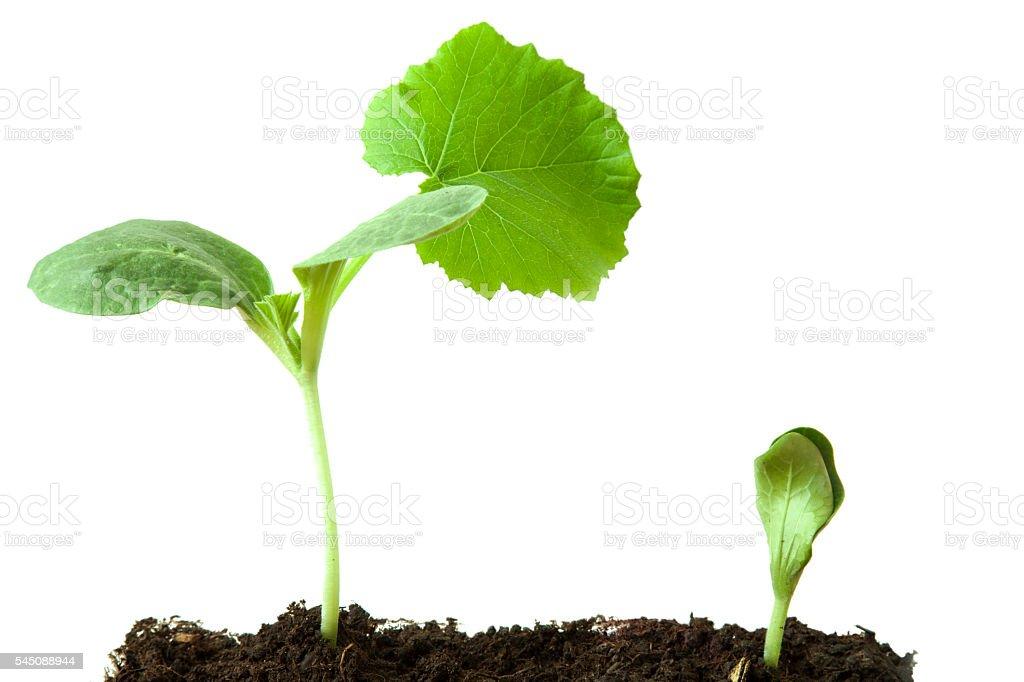 Newborn zucchini. stock photo