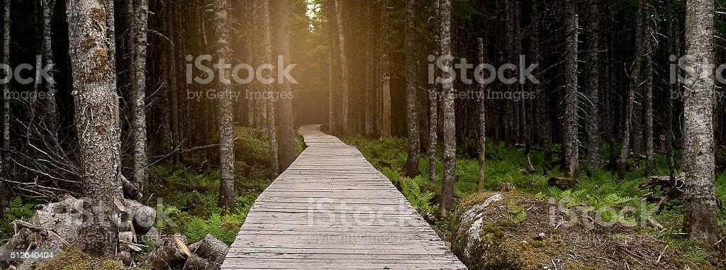 Newfoundland Light Through the Trees stock photo