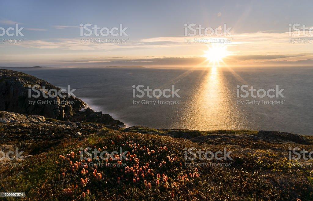 Newfoundland Sunset and Wildflowers stock photo