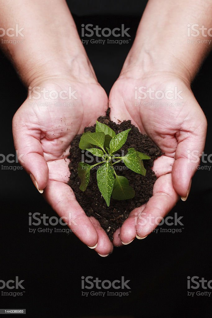 newly born plant royalty-free stock photo