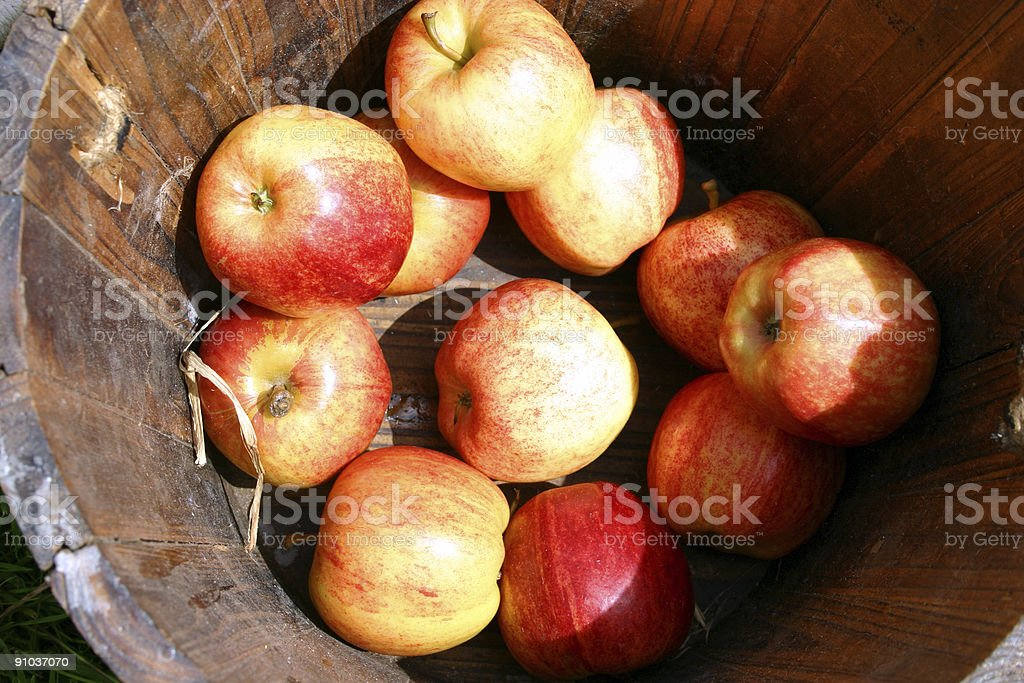 newly harvested English garden apples royalty-free stock photo