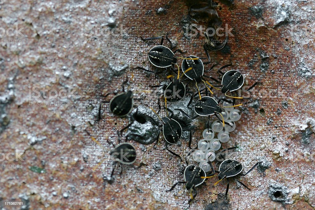 newly hatched bugs royalty-free stock photo