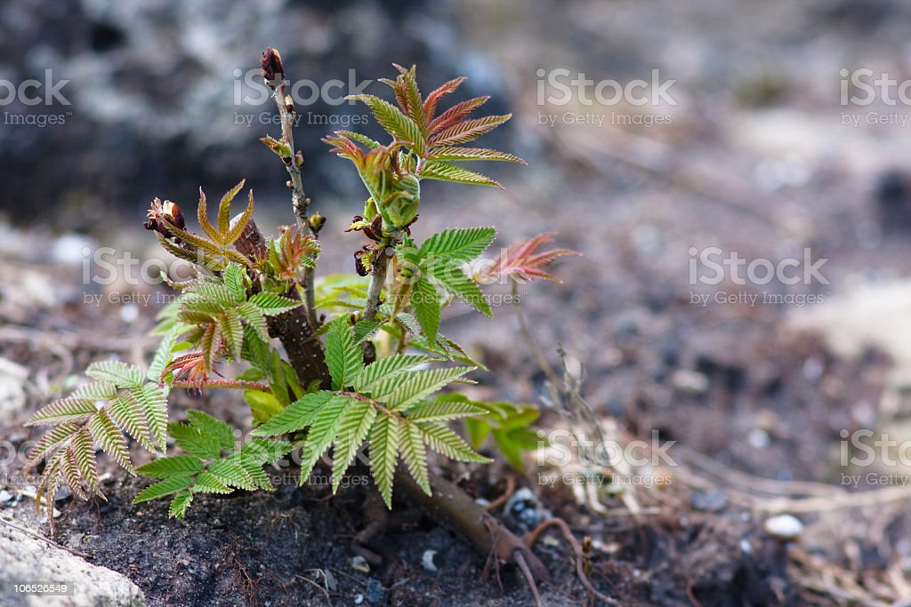 Newly minted leaves stock photo