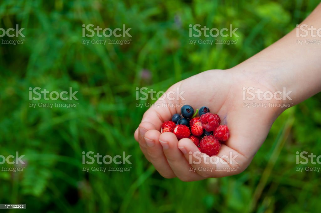 Newly picked berries royalty-free stock photo