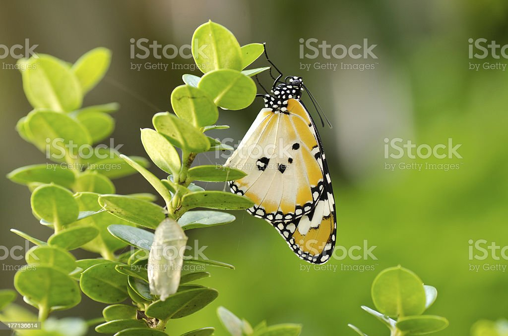 Newly transformed butterfly stock photo