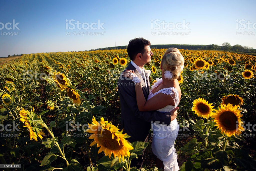 Newlyweds in sunflowers royalty-free stock photo