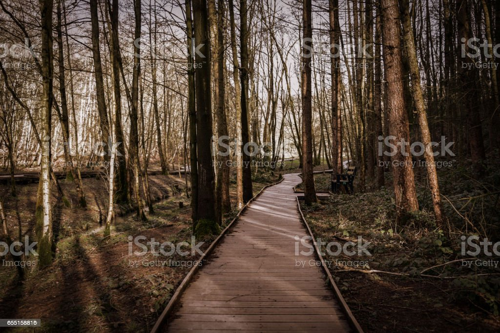 Newmillerdam forest park stock photo