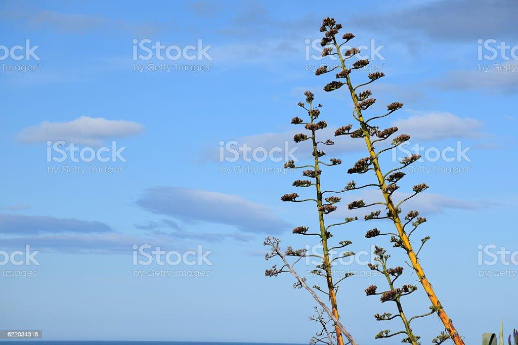 New-Zealand native flora - Phormium stock photo