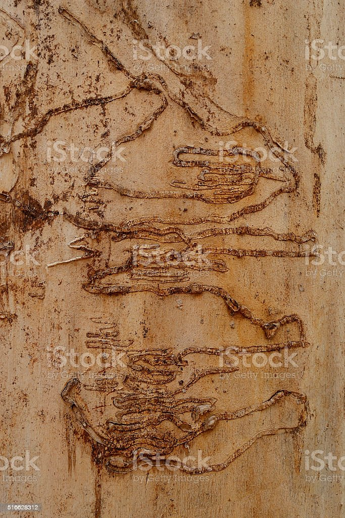 Next bark on a tree trunk. stock photo