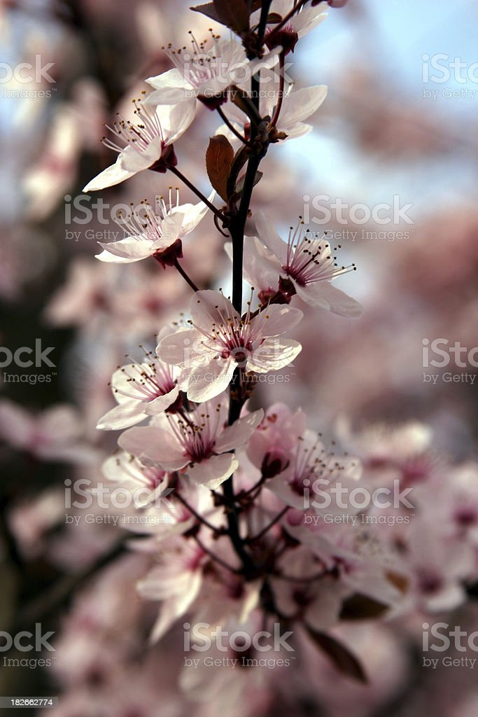 Next spring will come royalty-free stock photo