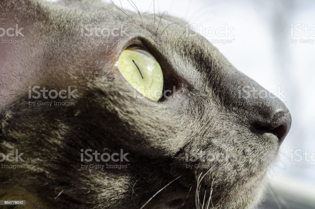 nice cat sitting at home stock photo