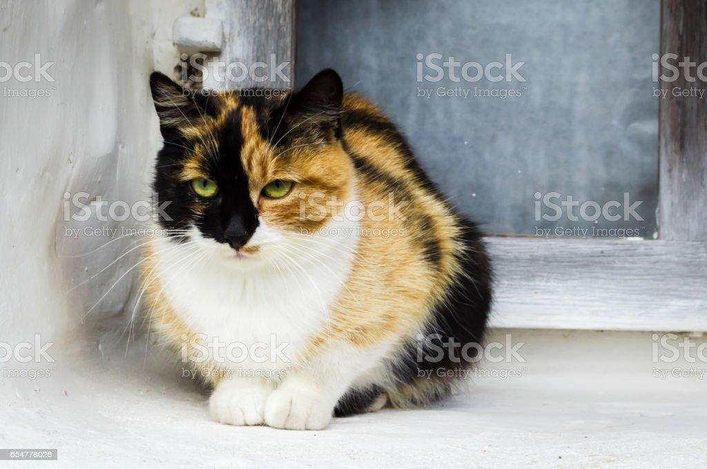 nice cat sitting on street stock photo