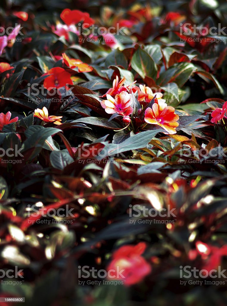 Nice flower in garden royalty-free stock photo