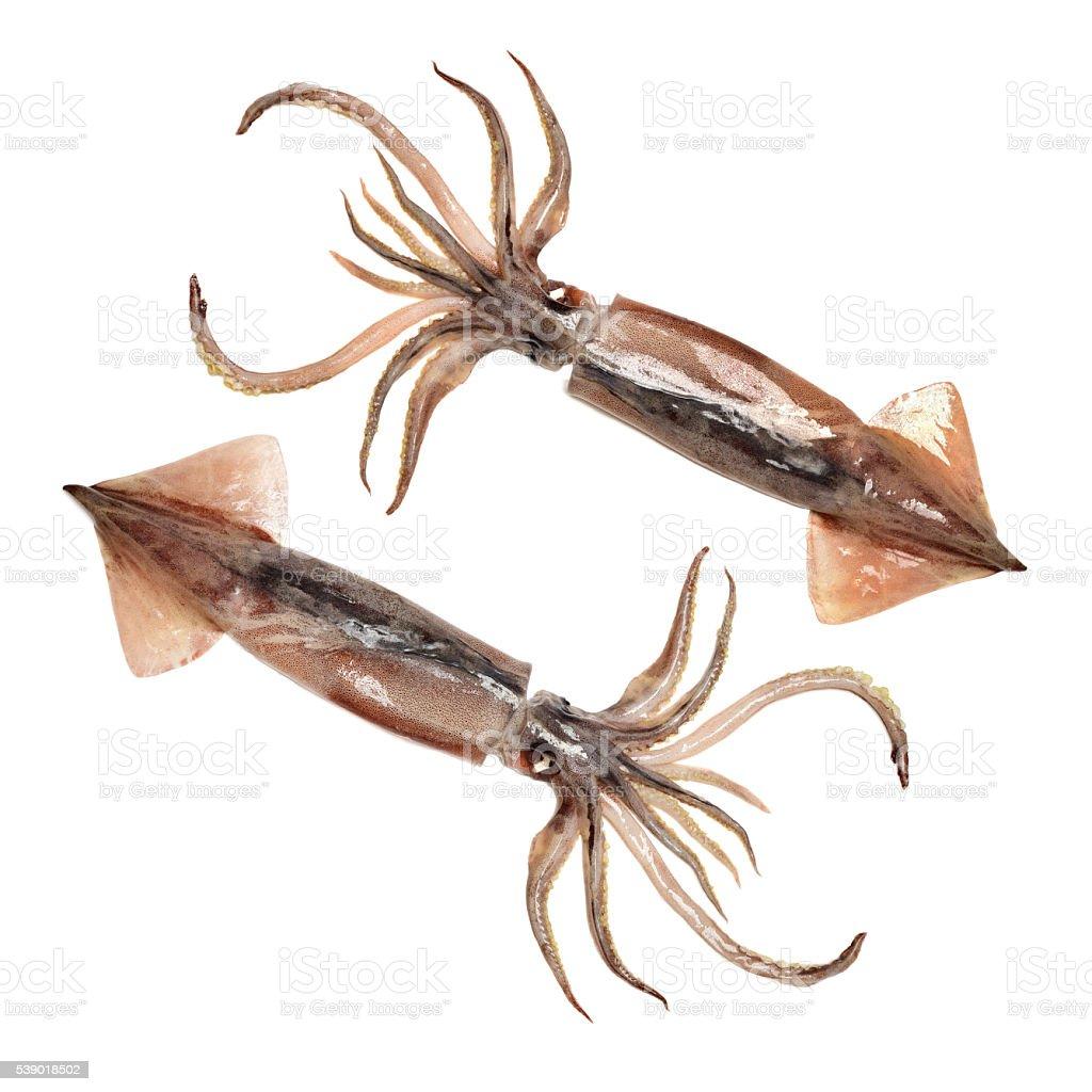 nice fresh squid stock photo