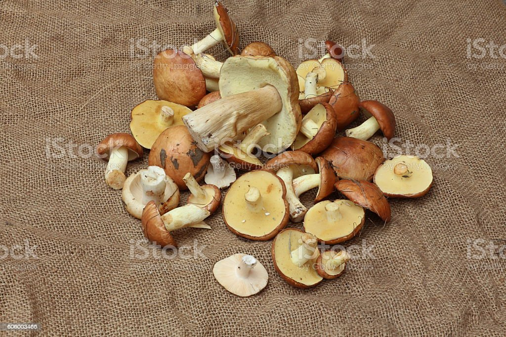Nice heap of vegetarian products on the rough cloth stock photo