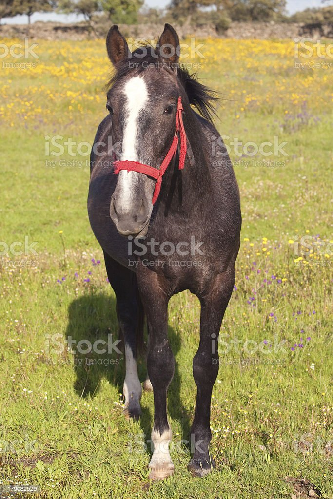 Nice horse royalty-free stock photo