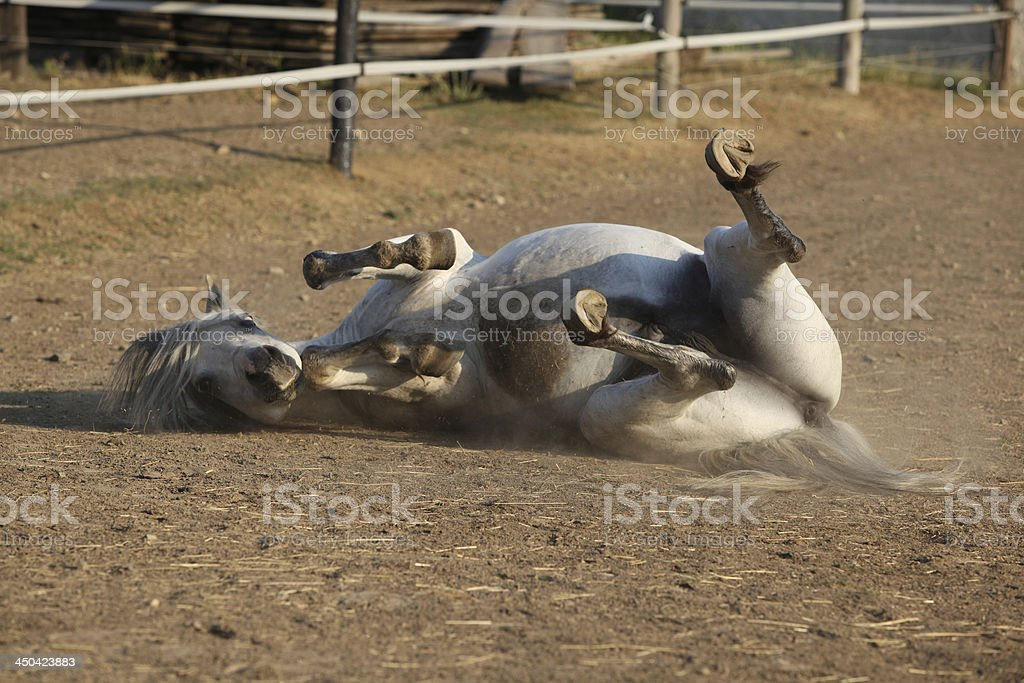 Nice horse rolling stock photo